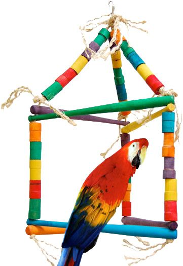 A Large Parrot Perching On a Bird Swing
