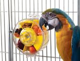 Foraging Parrot Toy Wheel