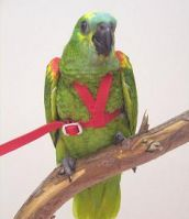 Aviator Bird Harness And Leash Small