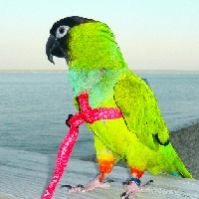 Aviator Bird Harness And Leash X-Small