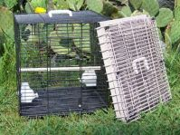 A&E Collapsible Travel Cage Small Or Medium Birds (A&E Travel Cage Choose Color: Sandstone)